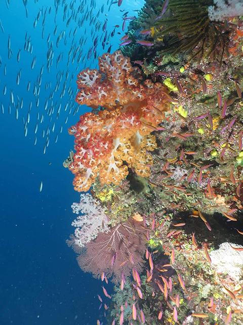 Namena Marine reserve,photo: Geoffrey Koroi